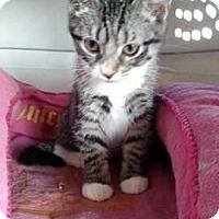 Adopt A Pet :: Alice - South Bend, IN