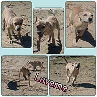 Adopt A Pet :: Lavern meet me 10/28 - Manchester, CT