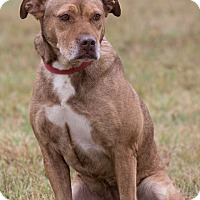 Adopt A Pet :: Cocoa - Broken Arrow, OK