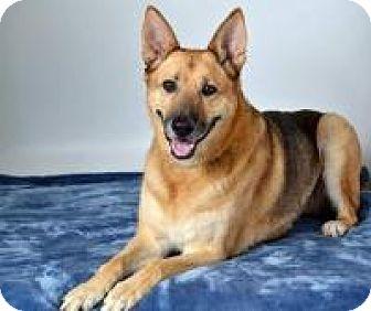 Shepherd (Unknown Type) Mix Dog for adoption in Clackamas, Oregon - P'Tina