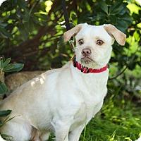 Adopt A Pet :: Rusty - Auburn, CA