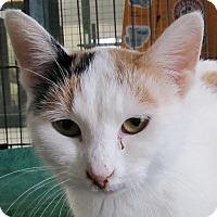 Adopt A Pet :: Judy Garland - Grinnell, IA