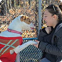 Adopt A Pet :: DIXIE - Linden, NJ