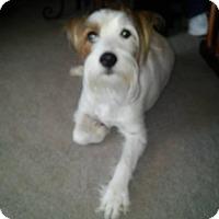 Adopt A Pet :: Jaxson - Blue Bell, PA