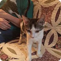Adopt A Pet :: Freckles - Delmont, PA