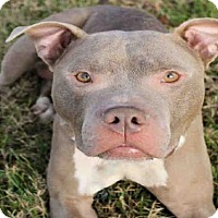 Adopt A Pet :: DIESEL - Canfield, OH