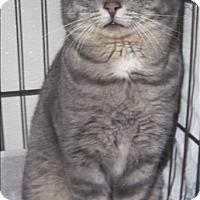 Adopt A Pet :: 17-01-0097 - Dallas, GA