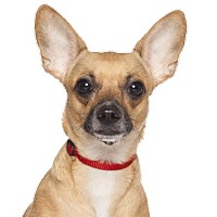 Adopt A Pet :: NOEL - Los Angeles, CA