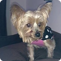 Adopt A Pet :: Buffy - Goodyear, AZ