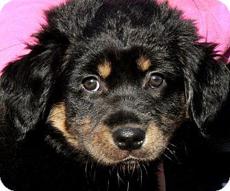 Wakefield Dog Rescue