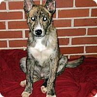 Adopt A Pet :: Jester - Tallahassee, FL