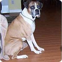 Adopt A Pet :: Gino - Thomasville, GA