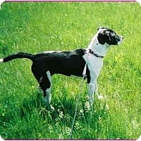 Adopt A Pet :: Zara - Raymond, NH