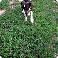 Adopt A Pet :: Celena - Sardis, TN