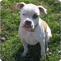 Adopt A Pet :: Wilson - Lodi, CA