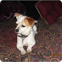 Adopt A Pet :: Dot - Memphis, TN