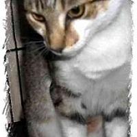 Adopt A Pet :: Marie - Jacksonville, FL