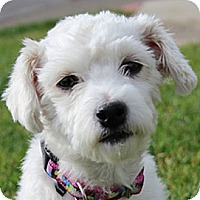 Adopt A Pet :: Molly - La Costa, CA