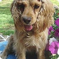 Adopt A Pet :: Miley - Sugarland, TX