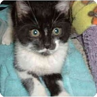 Adopt A Pet :: RW1 - Davis, CA