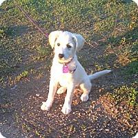 Adopt A Pet :: Peaches - Saskatoon, SK