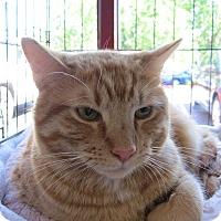 Adopt A Pet :: Petey - San Ramon, CA