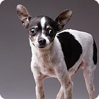 Adopt A Pet :: Snickers - Rochester, MN