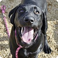 Adopt A Pet :: Elvis - Meridian, ID