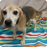 Adopt A Pet :: Titus - Waldorf, MD