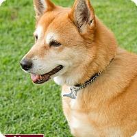 Adopt A Pet :: Charlee - Marina del Rey, CA