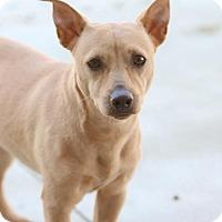 Adopt A Pet :: Douglas - Atlanta, GA