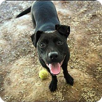Labrador Retriever Mix Dog for adoption in Decatur, Georgia - SHEBA