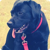 Adopt A Pet :: Magnificent Maddie - Worcester, MA