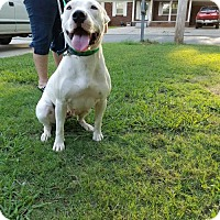 Pit Bull Terrier Dog for adoption in Decatur, Alabama - Lady