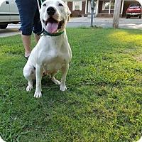 Adopt A Pet :: Lady - Decatur, AL