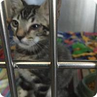 Adopt A Pet :: Celeste - Yucaipa, CA