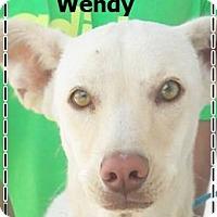 Adopt A Pet :: Wendy - El Cajon, CA