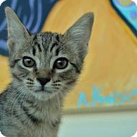 Adopt A Pet :: Mew - New Orleans, LA