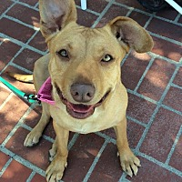Adopt A Pet :: Tally the Cuddle Bug - Los Angeles, CA
