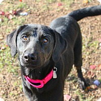 Adopt A Pet :: Eve - Shreveport, LA