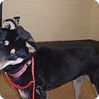 Adopt A Pet :: Joplin - Beverly Hills, CA