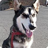 Adopt A Pet :: Aurora - Augusta County, VA