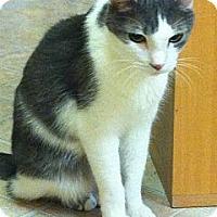 Adopt A Pet :: Pierre - Mobile, AL