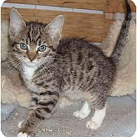 Adopt A Pet :: Milky Way - Davis, CA