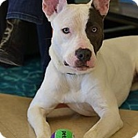 Adopt A Pet :: Rayne - North Olmsted, OH