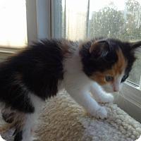 Adopt A Pet :: Susie Q - Colmar, PA
