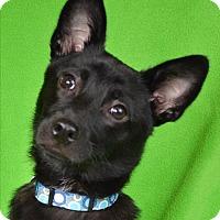 Adopt A Pet :: Huck Finn - Minneapolis, MN