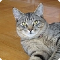 Adopt A Pet :: Brownsley - Vancouver, BC
