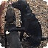 Adopt A Pet :: KANE - CHAMPAIGN, IL