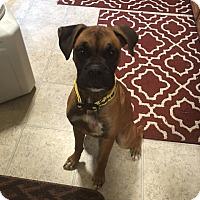 Adopt A Pet :: Leena - Wilmington, NC